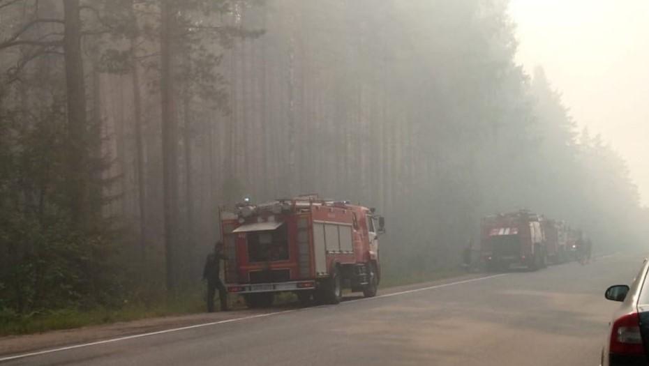 В Ленобласти вторые сутки тушат лес у форта Красная Горка