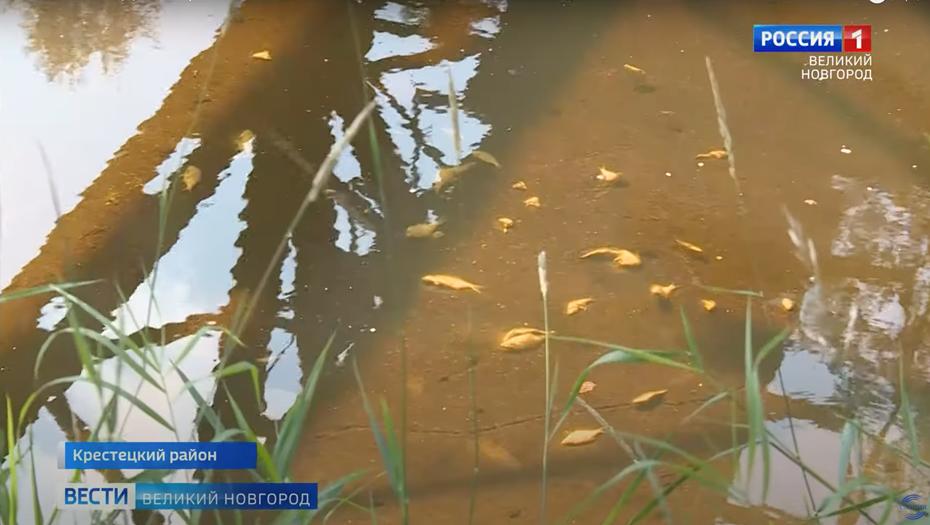 В Новгородской области назвали причины замора рыбы в реке Холова