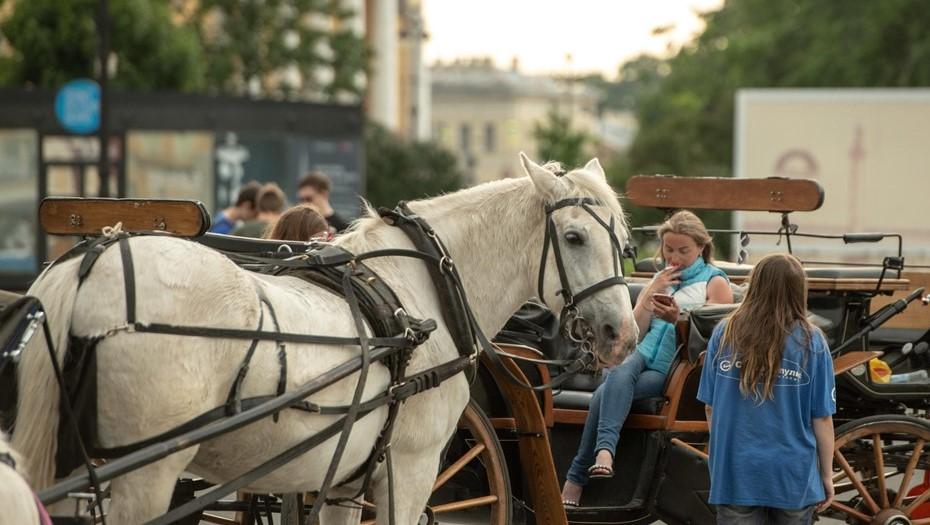 Пьяные посетители бара избили лошадь на улице Рубинштейна