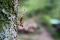 Роспотребнадзор рассказал о передаче инфекций через комариные укусы