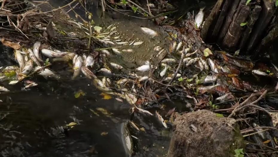 СКР начал проверку по факту массовой гибели рыбы в новгородской реке