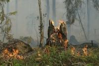 В Рослесхозе заявили, что лесные пожары в Якутии не угрожают населённым пунктам