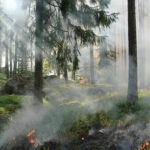 Превышение вредных веществ из-за горящих торфяников выявлено в Екатеринбурге