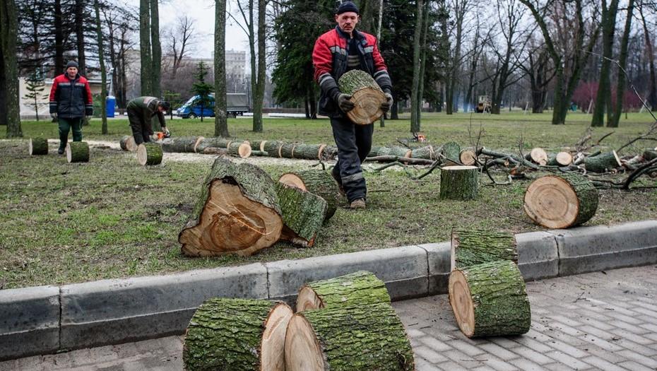 Ураган повалил более 70 деревьев в парках и скверах Петербурга
